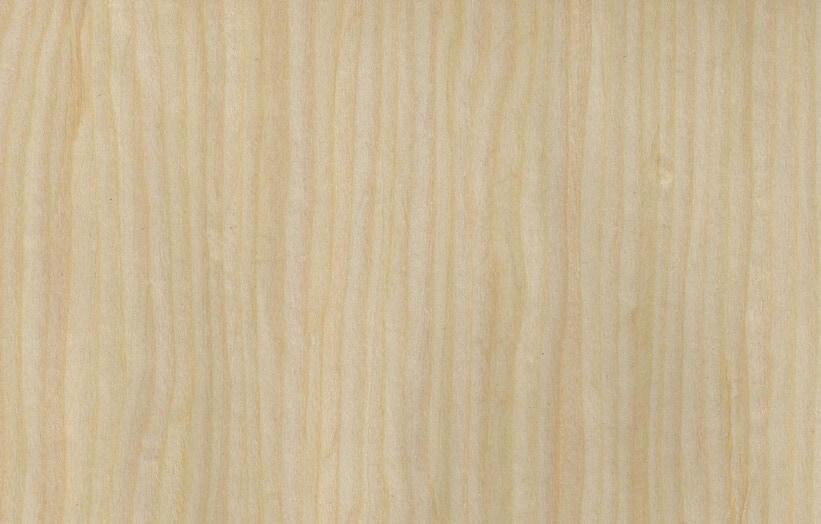 maple veneers